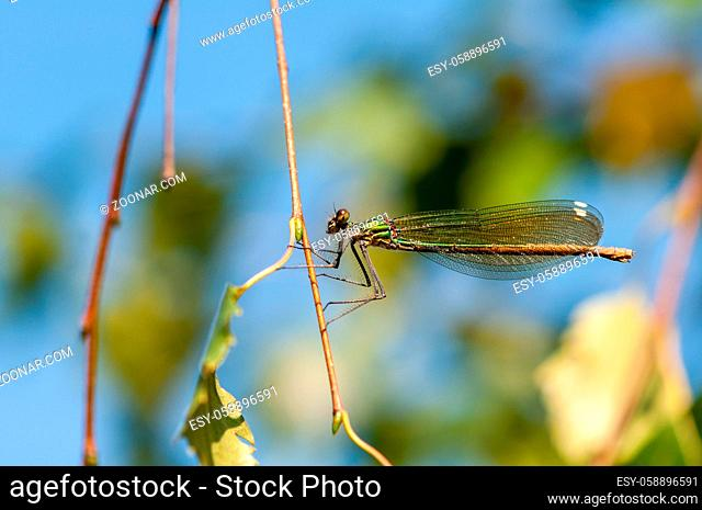Close-up of a dragonfly resting on a branch
