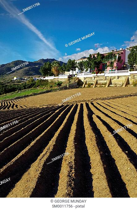 Ploughed and Ridged Fiels,