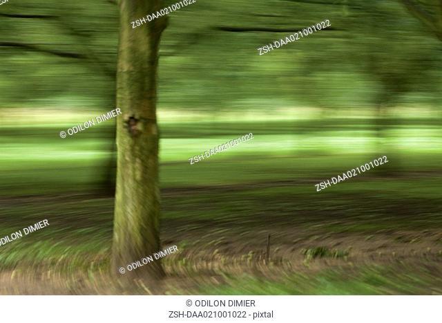 Tree in landscape, blurred motion