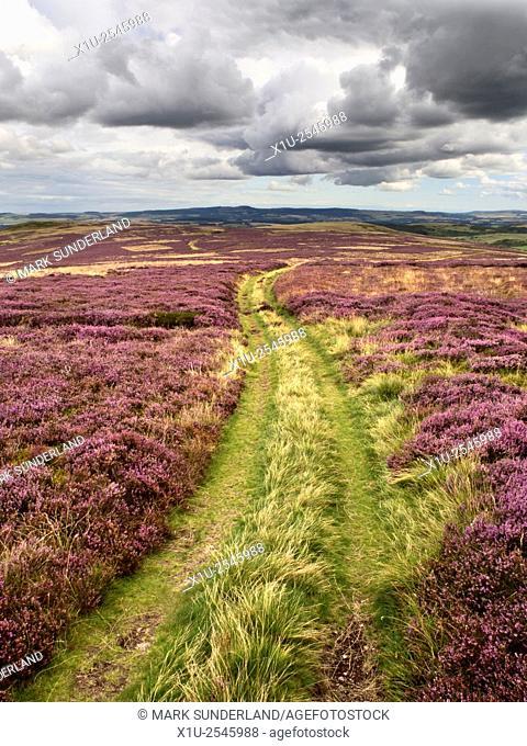 Track over Heather Moorland near Wooler Northumberland National Park England