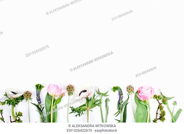 Pink tulips, white anemones, pink cloves and white buttercups lying on white background in a row