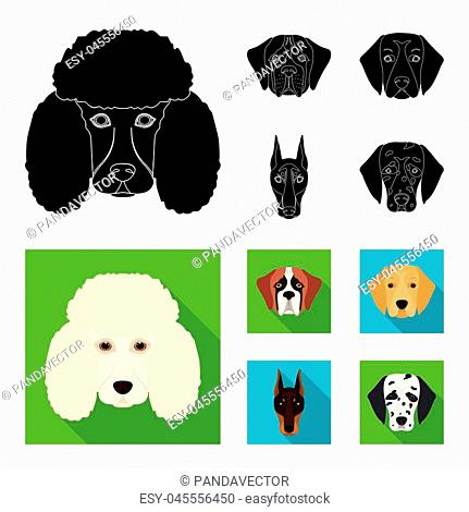 Muzzle of different breeds of dogs.Dog of the breed St. Bernard, golden retriever, Doberman, Dalmatian set collection icons in black