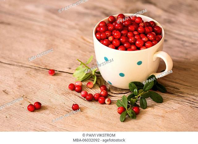 Cup of lingonberries
