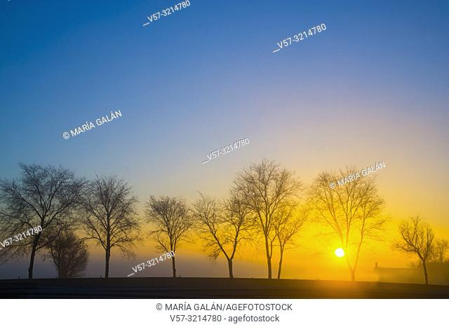 Trees at dawn. Dos Barrios, Toledo province, Castilla La Mancha, Spain