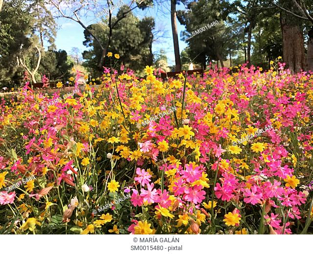 Spring flowers in The Retiro park. Madrid, Spain