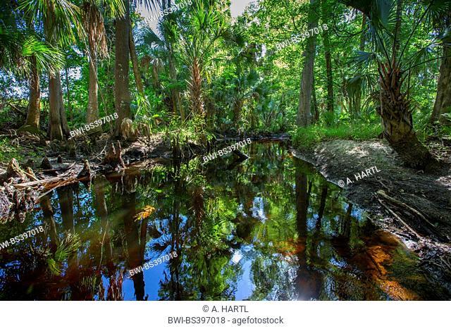 blackwater river with tropical vegetation, USA, Florida, Reedy Creek, Kissimmee