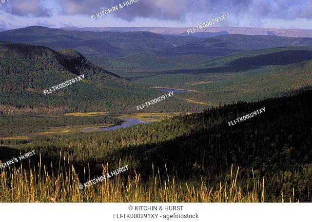 Boreal Forest with balsam fir, white spruce & white birch  Autumn  Stuckless Pond  Gros Morne National Park, Newfoundland
