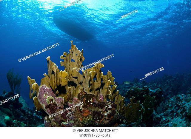 Underwater view and the underside of a boat Compasspoint, Caymans