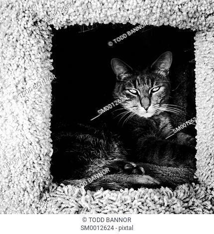 Tabby cat inside kitty condo