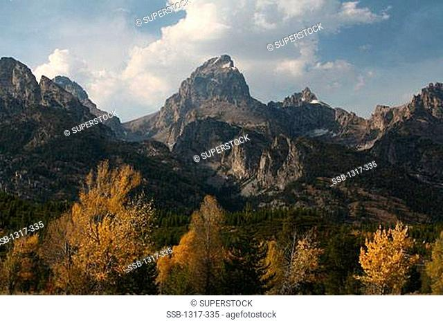 Aspen trees with a mountain range in the background, Taggart Lake, Grand Teton National Park, Wyoming, USA