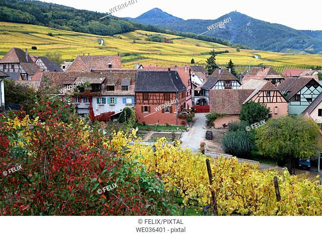 Hunawihr, Vosges, Alsatian wine road, Alsace, France