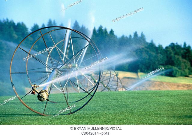 Sod fields, irrigation
