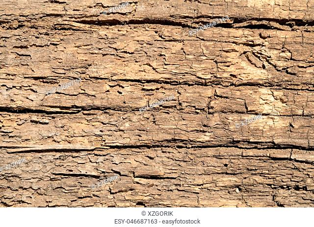 Loose texture of rotten wood