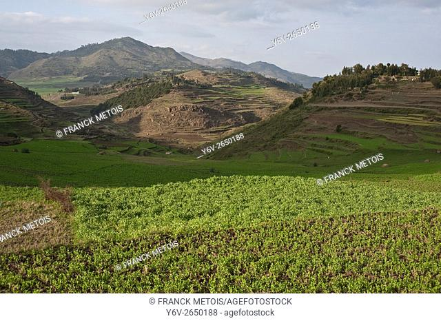 Landscape near Korem ( Tigray state, Ethiopia). Korem and its surroundings became famous during the 1984-1985 famine as the worst hit place