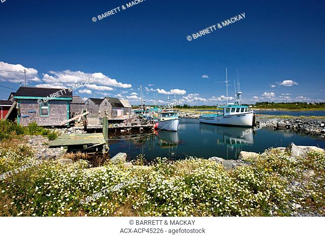 Blueberry field, Diligent River, Bay of Fundy, Nova Scotia, Canada
