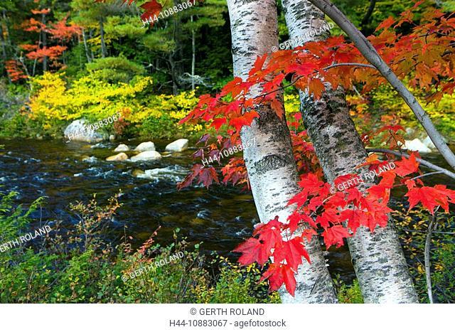 Swift River, USA, Amerika, Vereinigte Staaten, New Hampshire, White Mountain, Fluss, Bäume, Ahorn, Espen, Blätter, Wald, Verfärb
