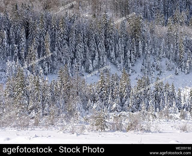 Valley of river Rissbach after heavy snowfall near village Vorderriss during winter. Europe, Germany, Bavaria