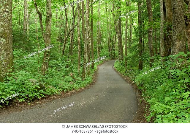 Roaring Fork Motor Nature Trail in the Great Smoky Mountains National Park, Tennessee