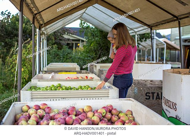 Mother and baby standing near crates full of apples and pears in orchard, Parkdale, Oregon, USA