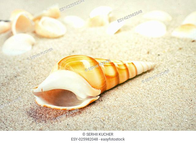 Sea shells on sand. Summer beach background