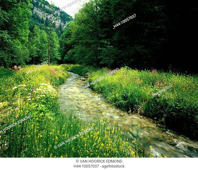 10057037, excursionist, Creek, brook, flower meadow, Combe de Biaufond, canton Jura, scenery, Switzerland, Europe, edge of fo