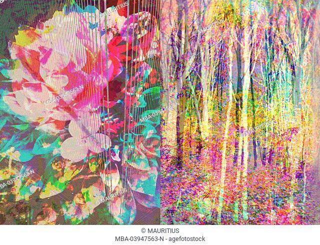 A Floral Montage