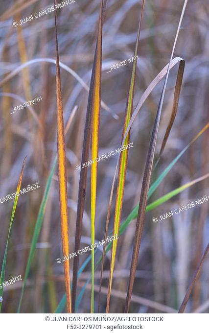 Flora, Wetland detail, Danube Delta, UNESCO WORLD HERITAGE, Tulcea County, Romania, Europe
