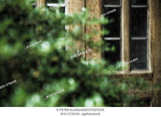 Bush in front of two wooden doors