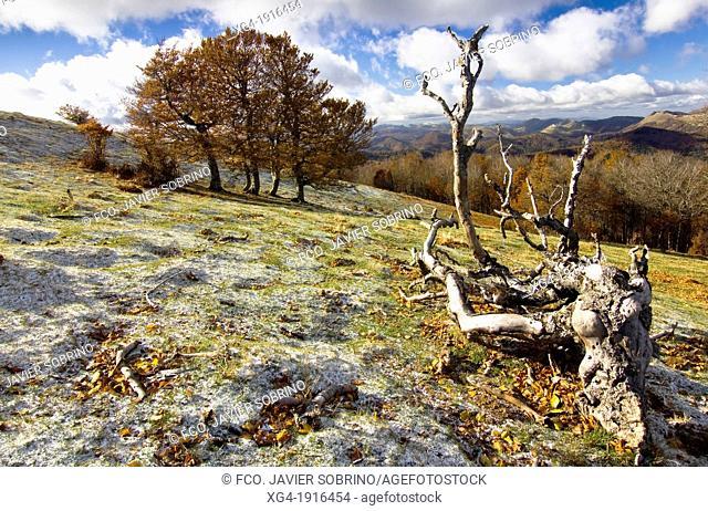 Irati forest from the Sierra de Abodi - Navarre Pyrenees - Navarra - Spain - Europe