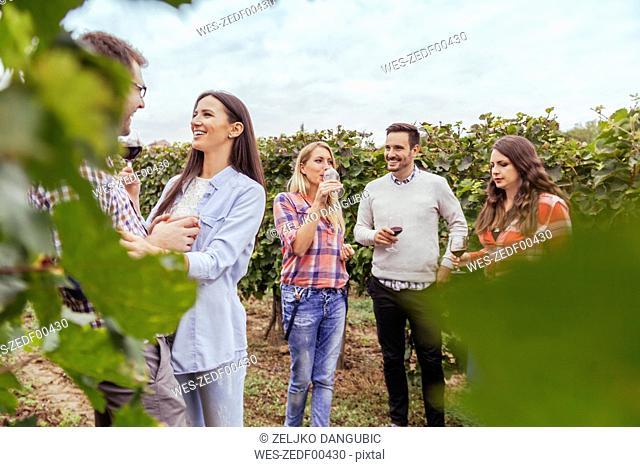 Friends socializing in a vineyard