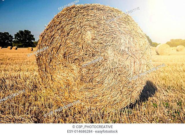 straw bale in the sun