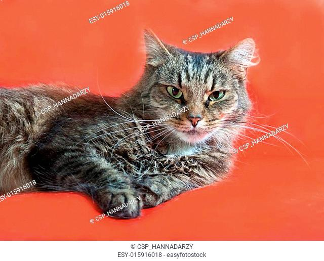 Striped fluffy cat with green eyes lying on red