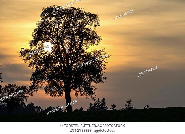 Sun Setting behind a Tree in Hausruck Quarter, Austria
