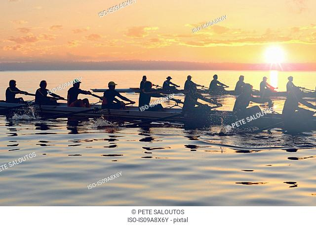 Twelve people rowing at sunset