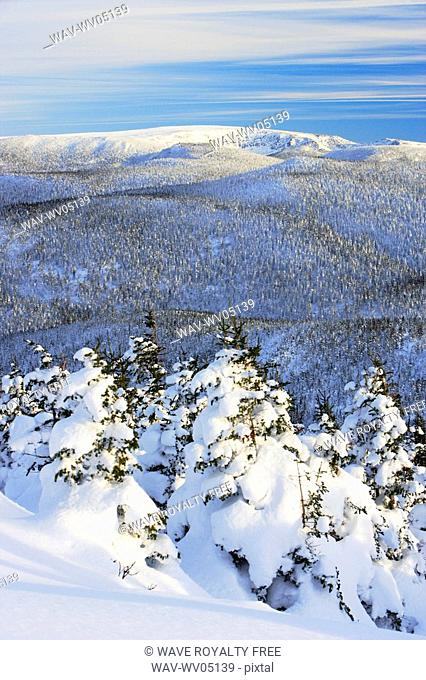 View of snow-covered trees at Pic de l'aube, Quebec, Canada