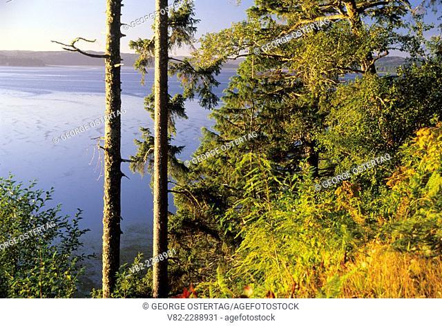 Willapa Bay, Bruceport County Park, Washington
