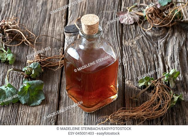 A bottle of Herb Bennet tincture with fresh young Geum urbanum plant with roots