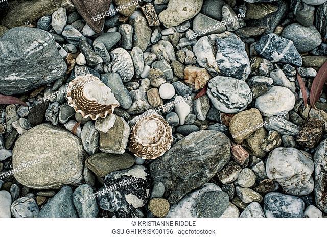 Seashells and Rocks, High Angle View