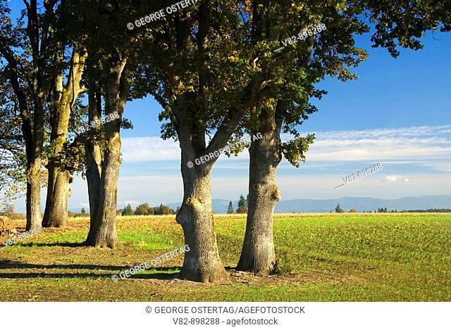 OR37044 Oak grove, Linn County, OR