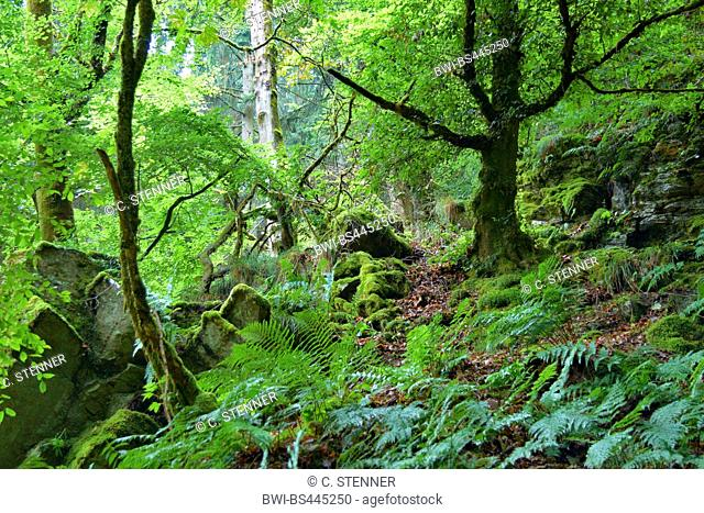 rocks at hiker path Rockenburger Urwaldpfad, Germany, Rhineland-Palatinate, Hunsrueck