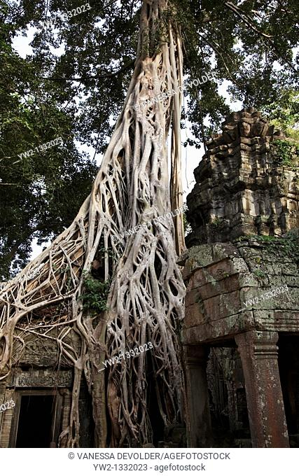 Ta Prohm, temple at Angkor in Cambodia. November 2010. V10CAM0400RM
