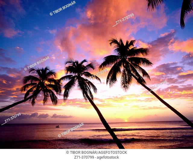 Palms at sunset in King's Beach. West Coast, Barbados, West Indies