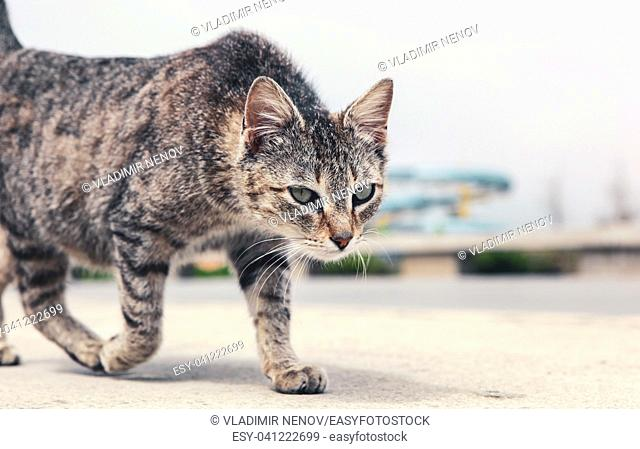 A beautiful cat on the street