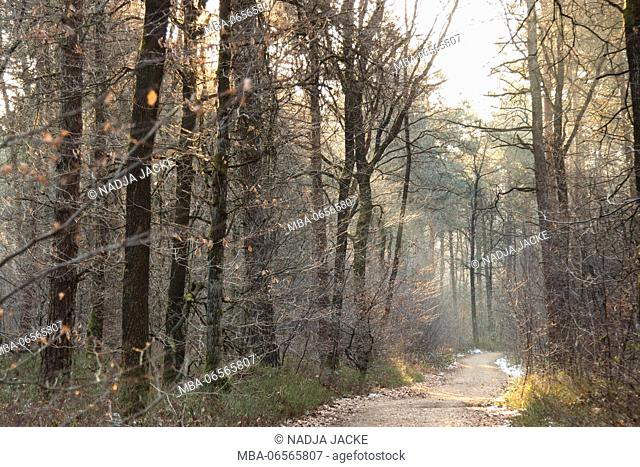 The Teutoburg Forest in the Münster region in winter