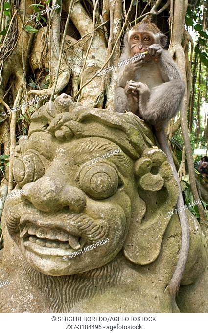Monkey Forest Sanctuary, Bali Indonesia