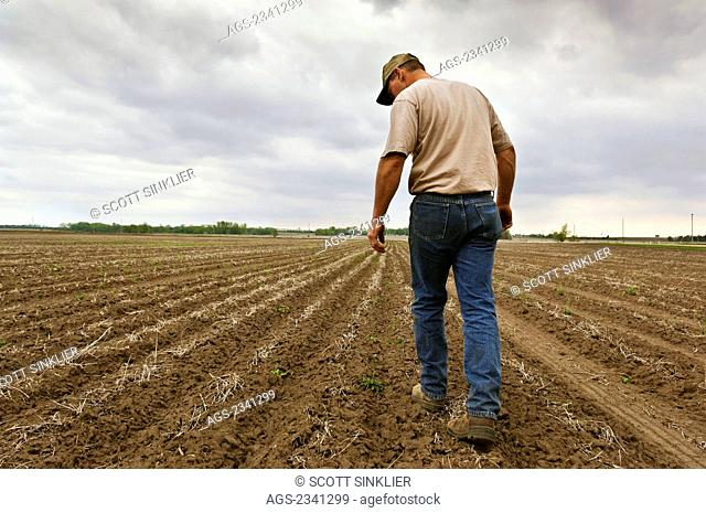 Agriculture - A farmer walks his newly planted corn field checking to be sure planting proceeded correctly, as storm clouds approach / Central Iowa, USA
