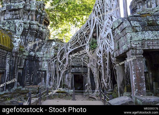 Ankor Wat, a 12th century historic Khmer temple and UNESCO world heritage site. Arches and carved stone with large roots spreading across the stonework