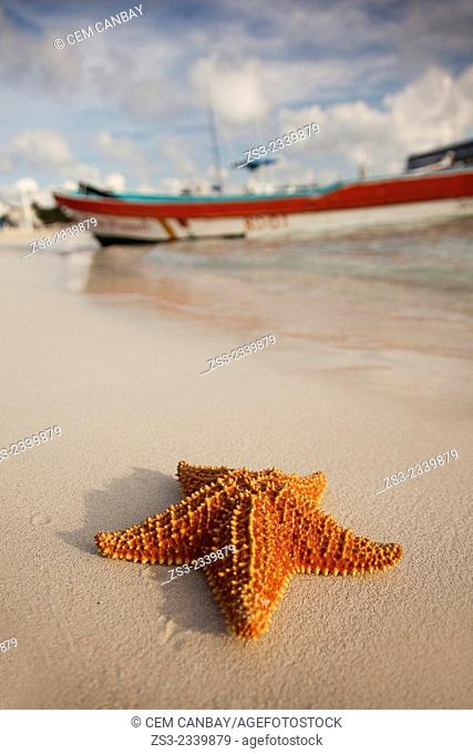 Starfish lying on the sand at the beach of Isla Mujeres with the fishing boats at the background, Cancun, Quintana Roo, Yucatan Province, Mexico, North America