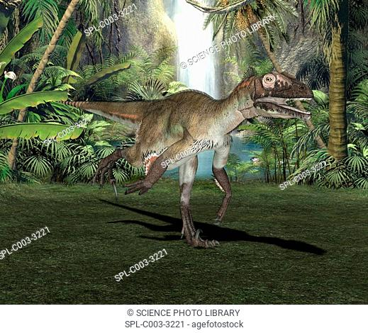 Utahraptor dinosaur, artwork. Utahraptor ostrommaysorum are dromaeosaurs and thought to have been an extremely lethal group of dinosaurs because of the 'killer...