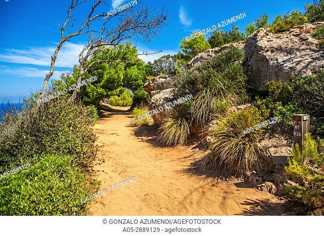 Cami de Cavalls path. Way to Cala Pilar Beach. Ciutadella de Menorca Municipality. Minorca. Balearic Islands. Spain